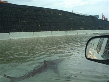 News Outlets Publish Fake Photo of Shark Swimming in Puerto Rico Hurricane Irene Floodwaters