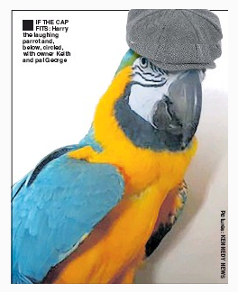 'Pain-loving' parrot Photoshopped with hat not a problem, UK press regulator rules