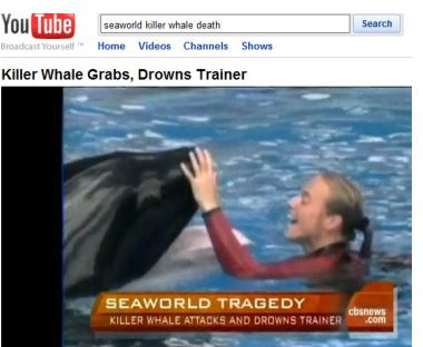 Judge Continues Temporary Injunction of SeaWorld Death Video